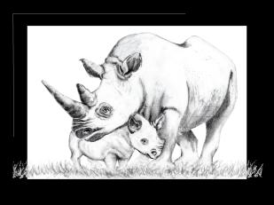 White Rhibo and calf sketch